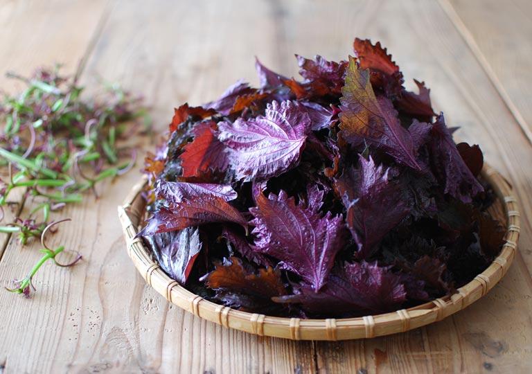 カゴに盛った赤紫蘇の葉
