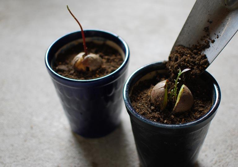 鉢に土を入れて植え替えしている様子
